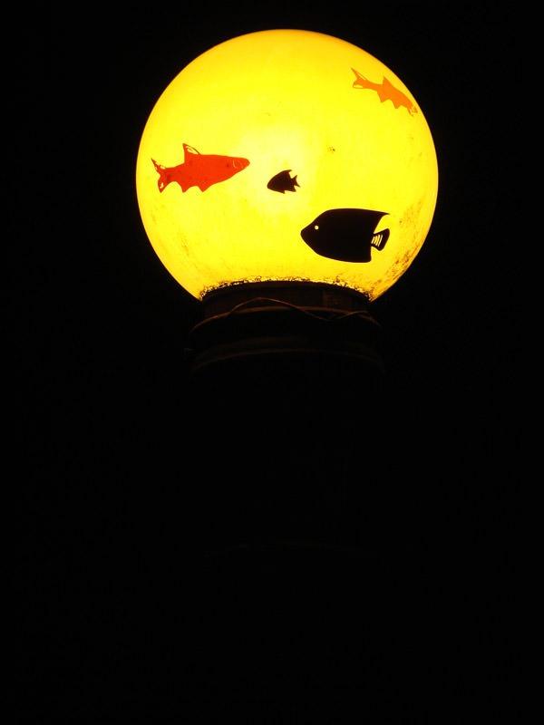 Aquários suspensos, vista noturna (Poro)